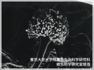 顕微鏡イメージ